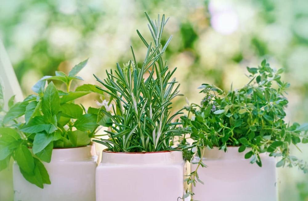 5 plantes thérapeutiques à cultiver chez soi Cultiver