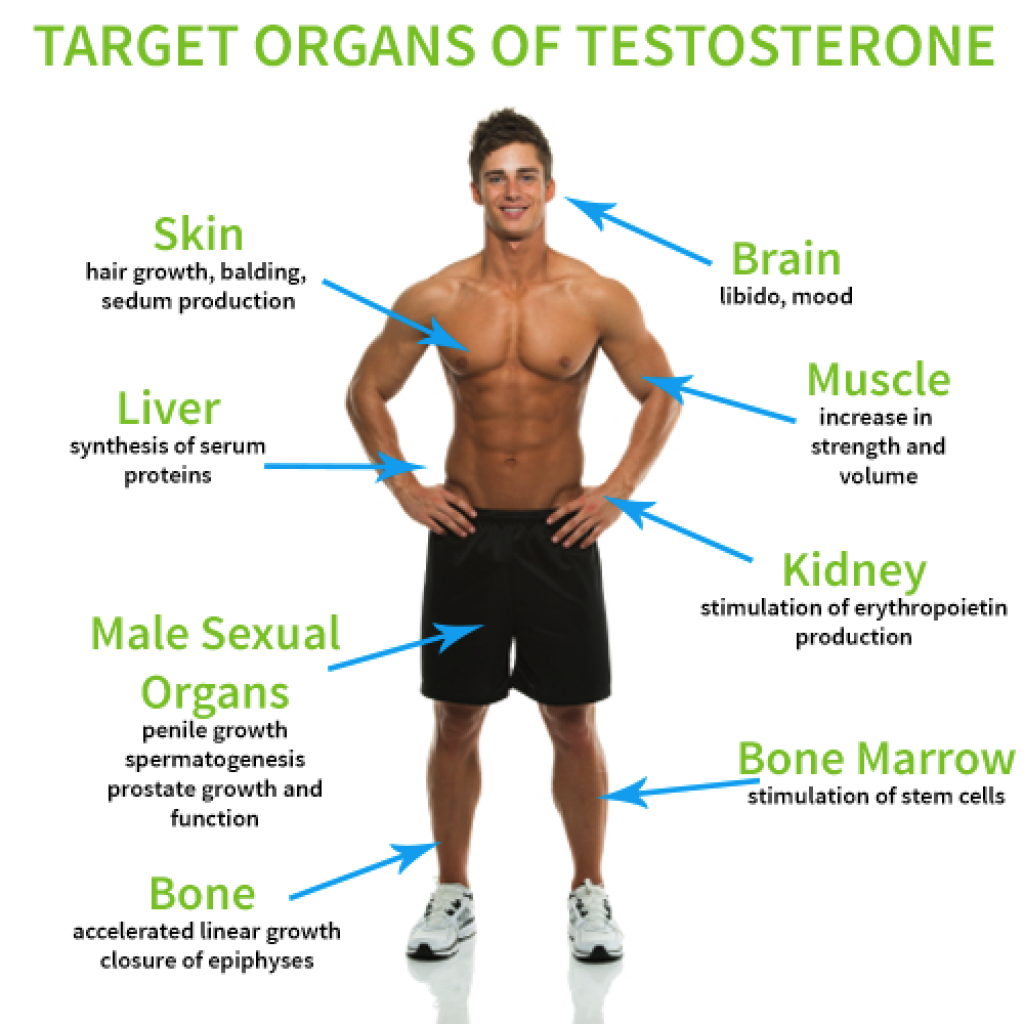 Testostrone for male sex organ