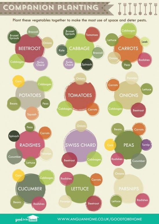 Do you know which vegetables grow best together Here are 5 companion planting charts to help you plant your garden and keep those veggies happy