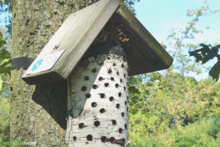 um nützlichen insekten eine nisthilfe zu bieten musst du