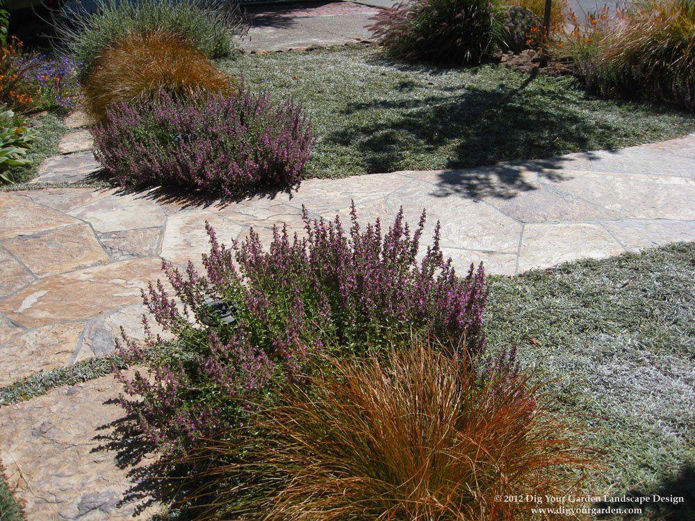 Drought tolerant ground cover parkway ideas california - Drought tolerant plants landscape design ...
