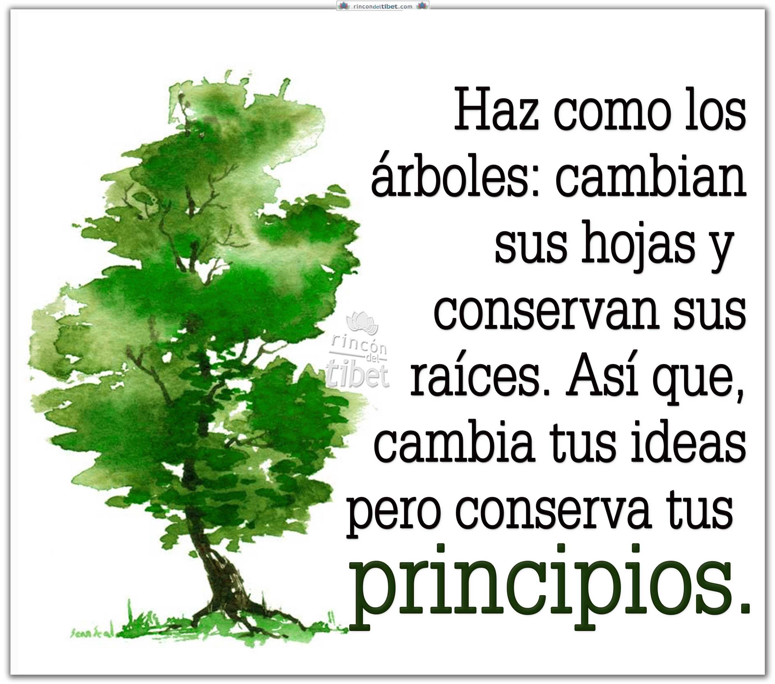 Haz Como Los árboles Cambian Sus Hojas Y Arbol