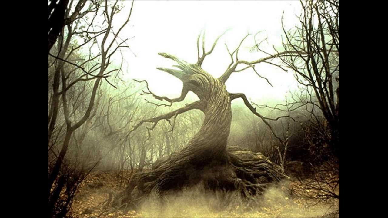Aphex Twin Tree Fantasy forest, Wanted movie, Hollow tree