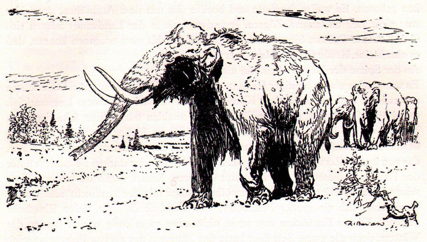 mammoths_by_zdenek_burian