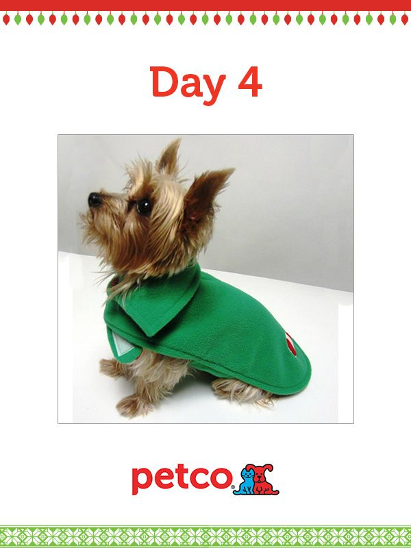 Here Is Today S 12 Days Of Pinterest Featured Image 12 6 2012 Pin This Candy Cane Reversable Sweater Image To One Of Your Boards Girl And Dog Cozy Dog Petco