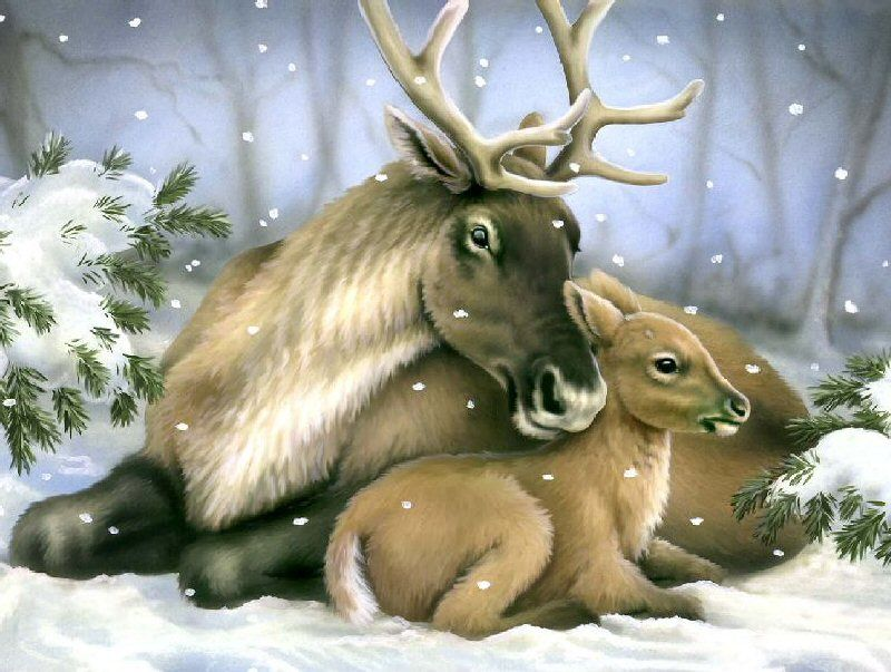 Reindeer ~ Howard Robinson