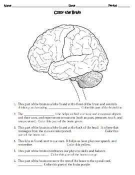 Human Body THE NERVOUS SYSTEM Worksheet | Science | Human ...