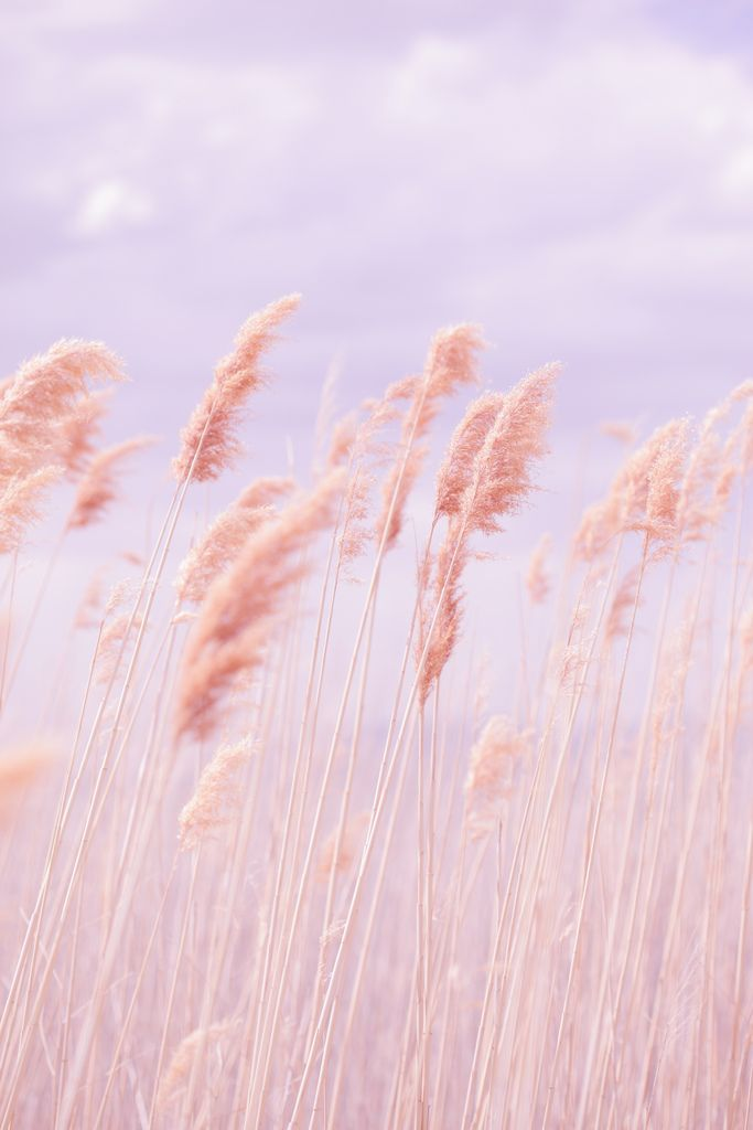 Dreamy Pastel Beach Grass