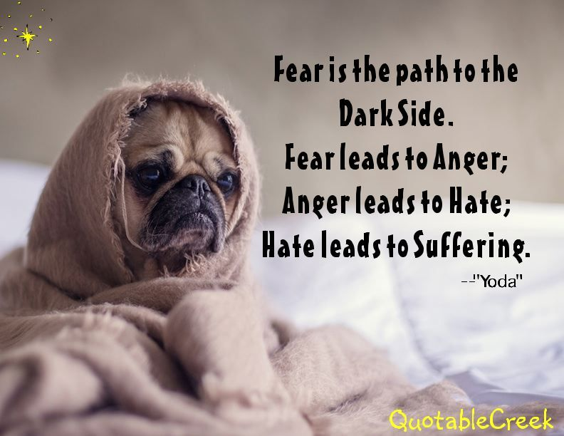 """Fear is the path to the  Dark Side. Fear leads to Anger; Anger leads to Hate; Hate leads to Suffering. --""""Yoda"""""""