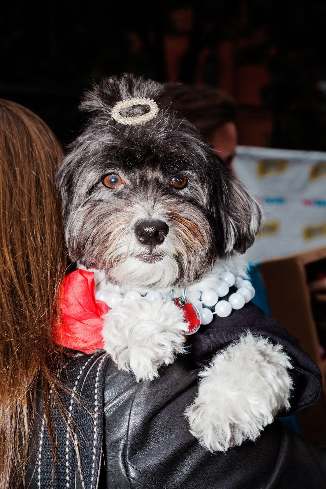 These Dogs In Costumes Are The Best Thing You'll See All Week #refinery29  http://www.refinery29.com/2016/10/127501/halloween-dog-costumes-tompkins-square-nyc#slide-24  Meet us at Tiffany's for breakfast. ...