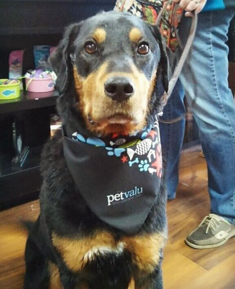 Cutecustomeralert Bella Stopped By Pet Valu Hampstead Md To Pick Up Her Adorable Petappreciationmonth Bandana Pet Valu Pets Adorable Cute