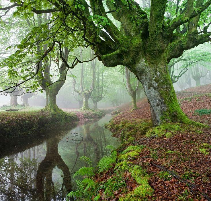 Imágenes de Paisajes Bosque, Hermosos paisajes y Paisajes