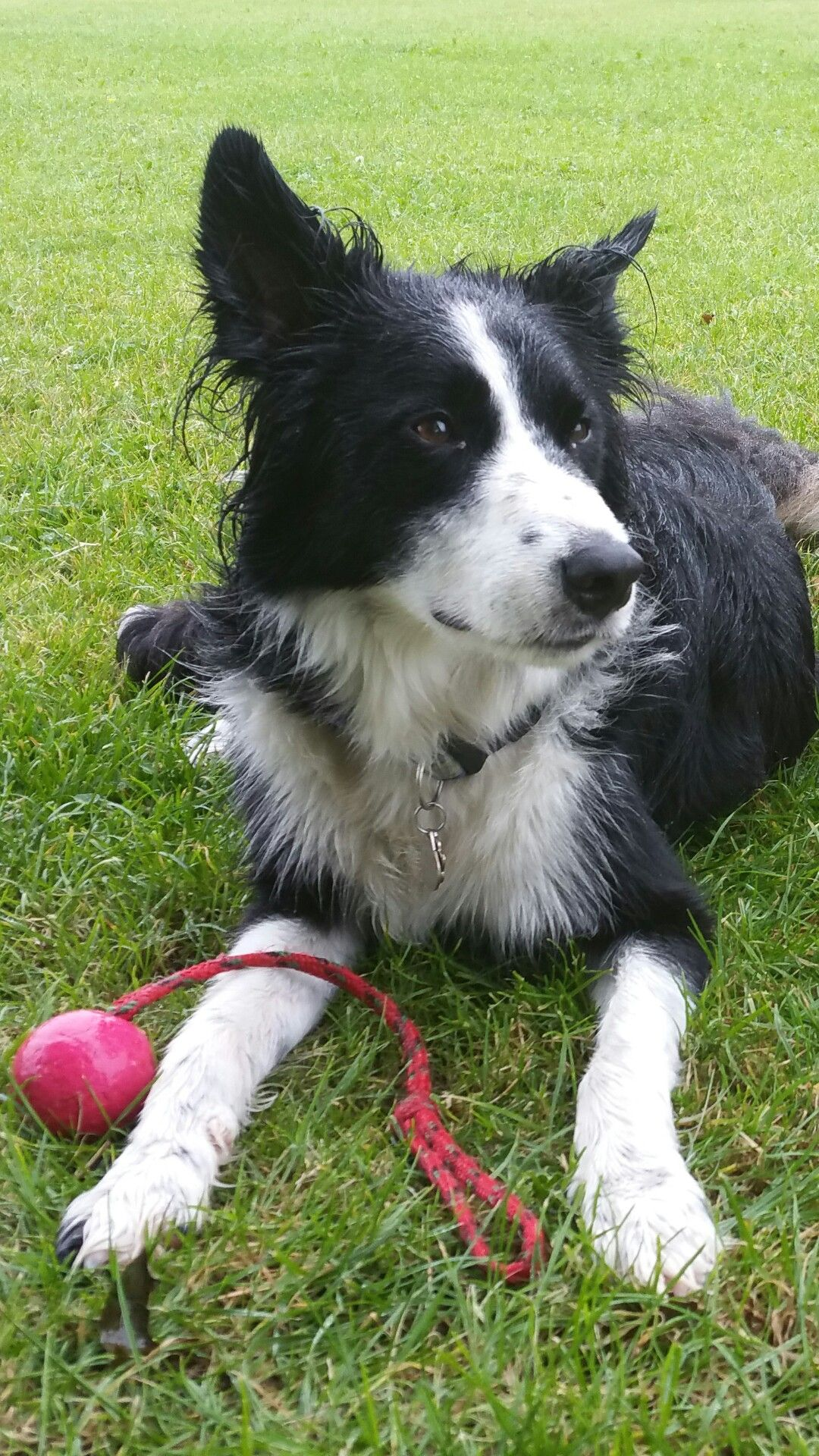 Abit Wet But Luvs His Playtimes No Matter Wat The Weather Is With Images Border Collie Pictures Border Collie Collie
