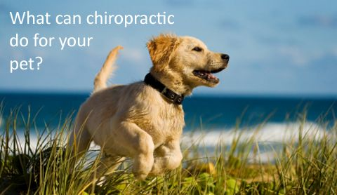 animal chiropractic - Google Search The Joint Southpark Meadows 9500 S IH-35 Austin, TX 78748 (512)292.3500