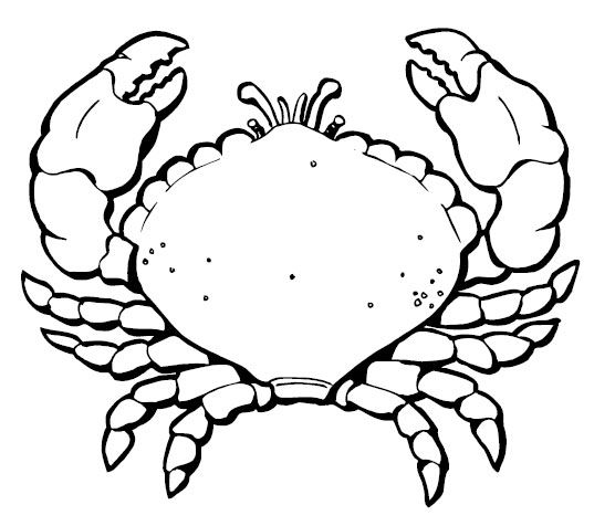 free printable crab coloring pages for kids - Crab Coloring Page