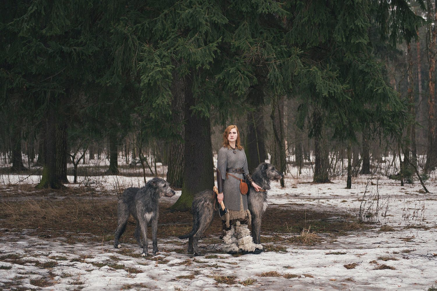 Irish Wolfhound Image By Paul Ideler On Forests