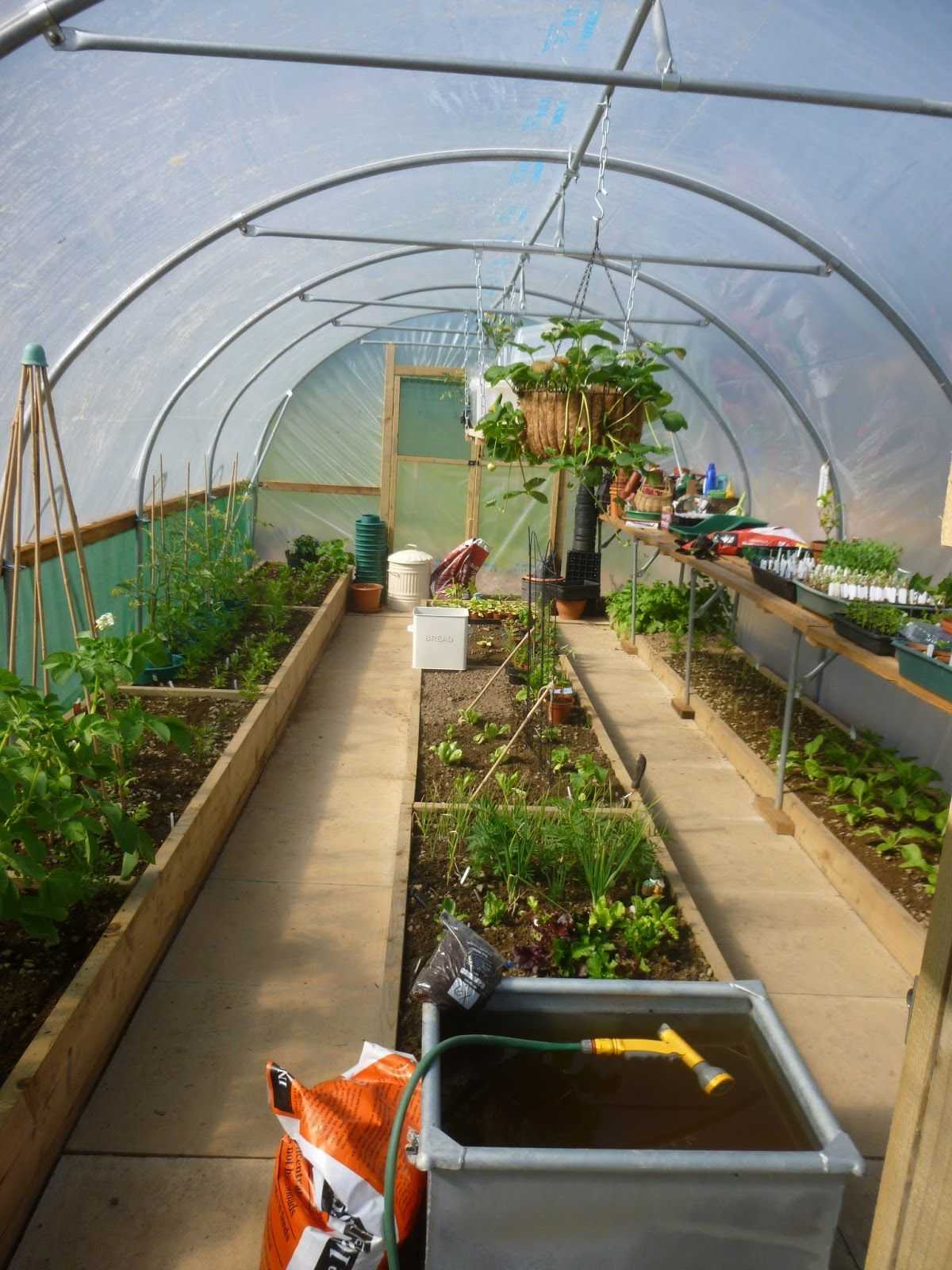 Polytunnel Bed Layout Google Search Greenhouse Farming Raised Garden Greenhouse