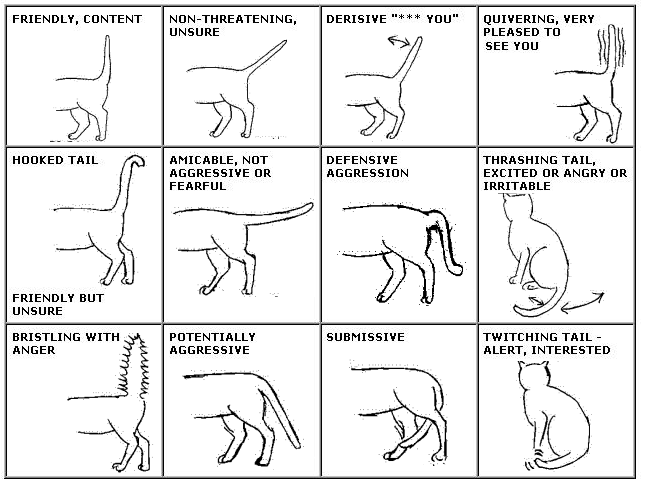 Image result for cats tails meaning