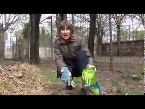 Video tutorial sulla #semina dei #fagiolini con l'utilizzo del Concime Verde Vivo Granulare Bio  http://www.verdevivo.it/granulari-myspace/concime-minerale-composto.aspx