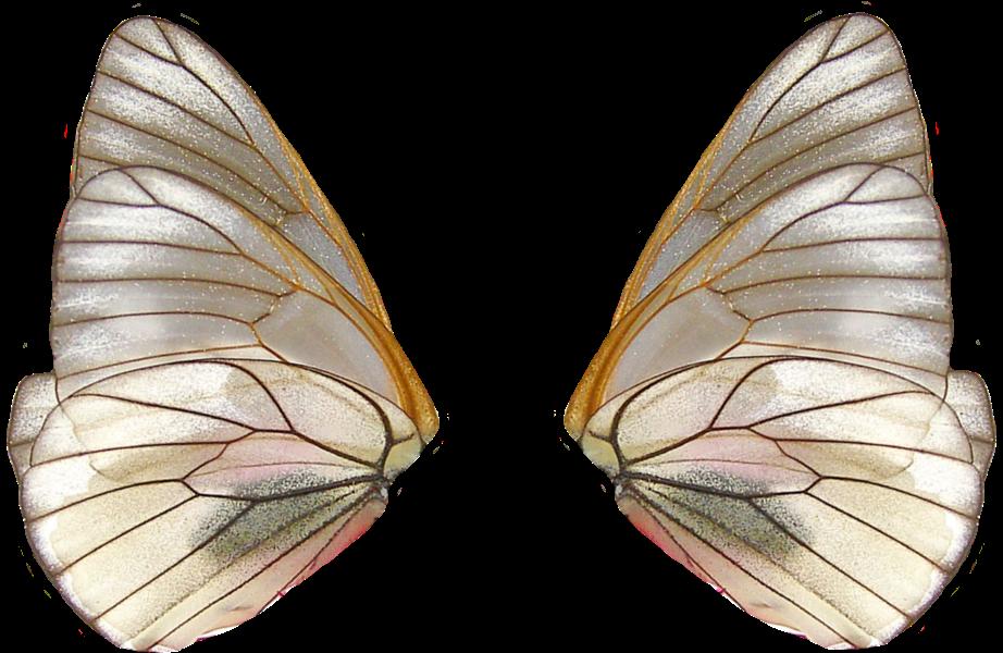 The Secret Fairy Garden Butterfly Wings Wings Butterfly