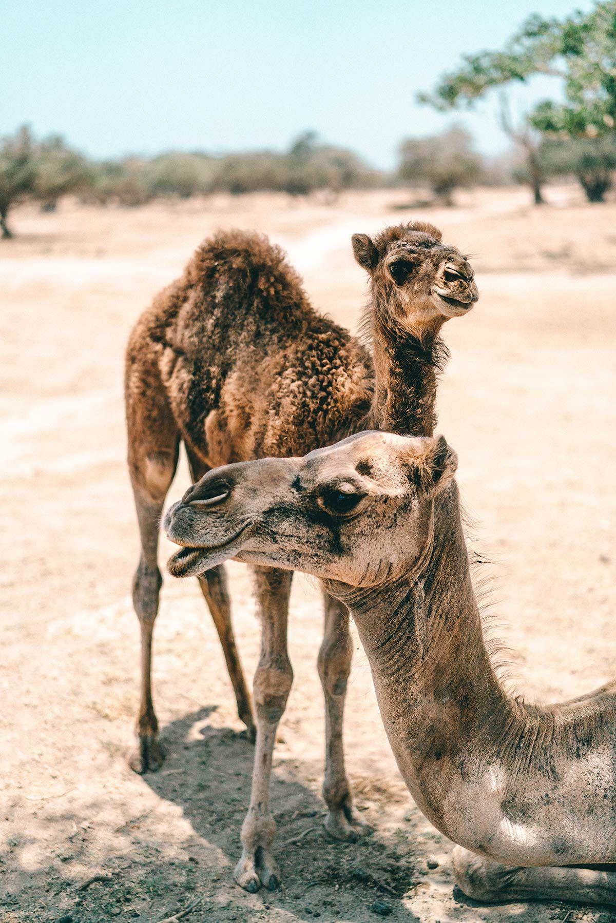 Oman Urlaub 7 Grunde Nach Salalah Im Oman Zu Reisen Oman Urlaub Salalah Oman