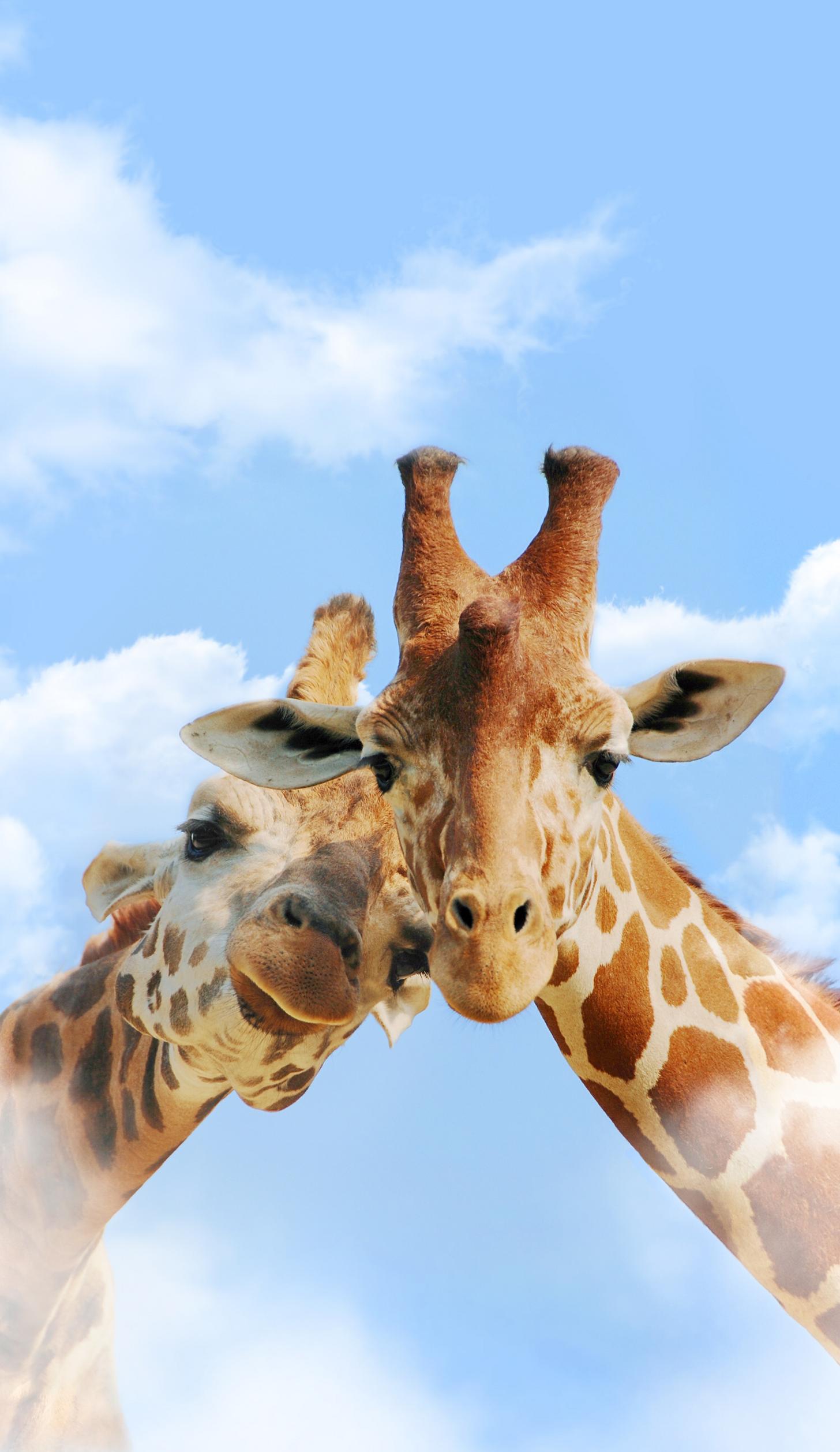 All Animals Wallpaper Dump Animals Animal Wallpaper Giraffe Pictures