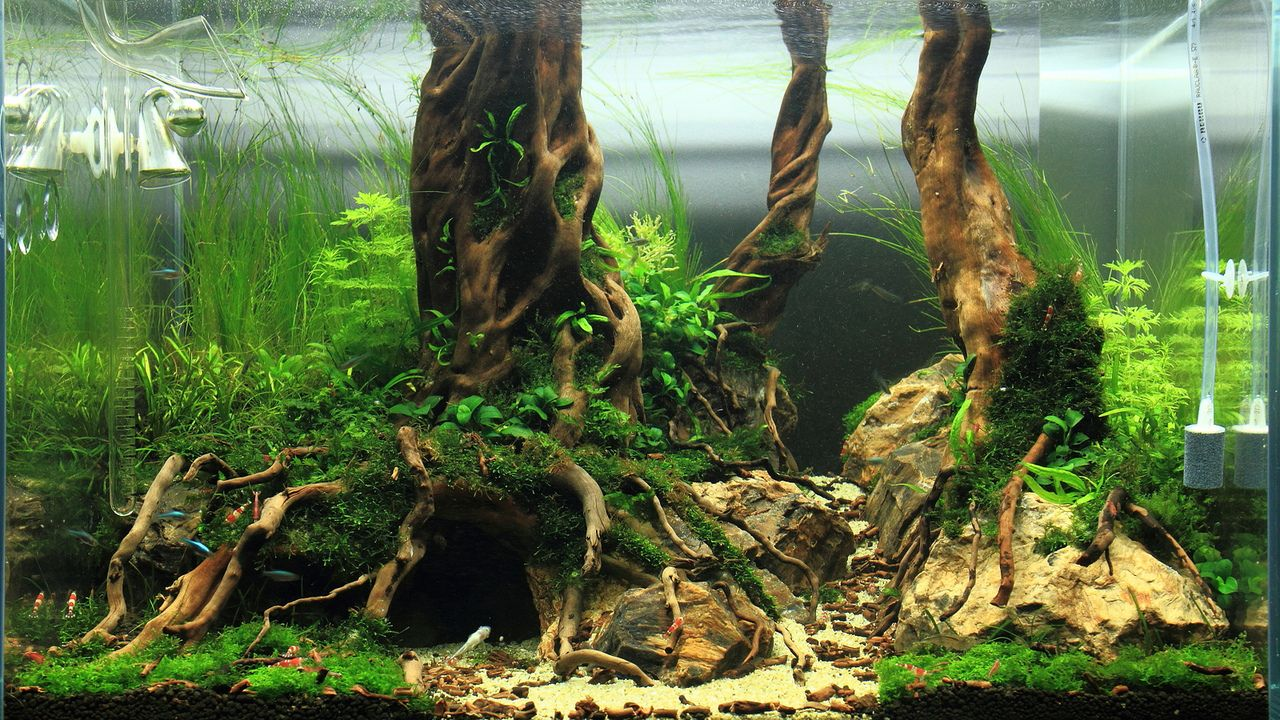 Freshwater Tree Aquascape Aquarium Landscape Aquascape Nature Aquarium