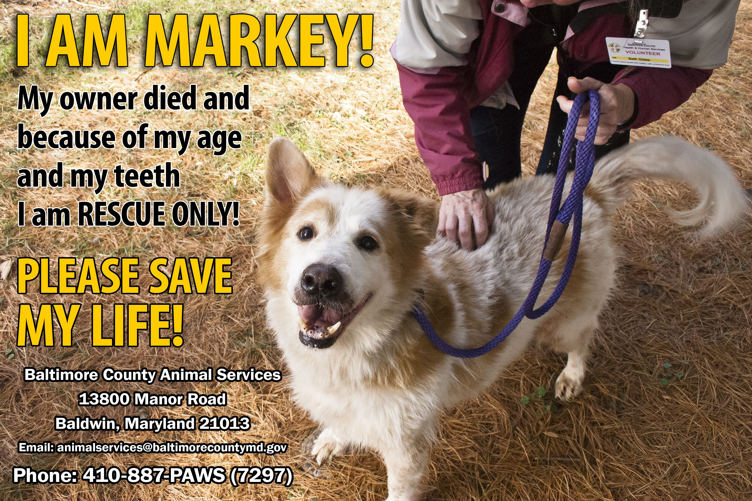 Markey S Contact Info Is Baltimore County Animal Services 13800 Manor Road Baldwin Maryland 21013 Email Animalservic Animal Rescue Animals Baltimore County