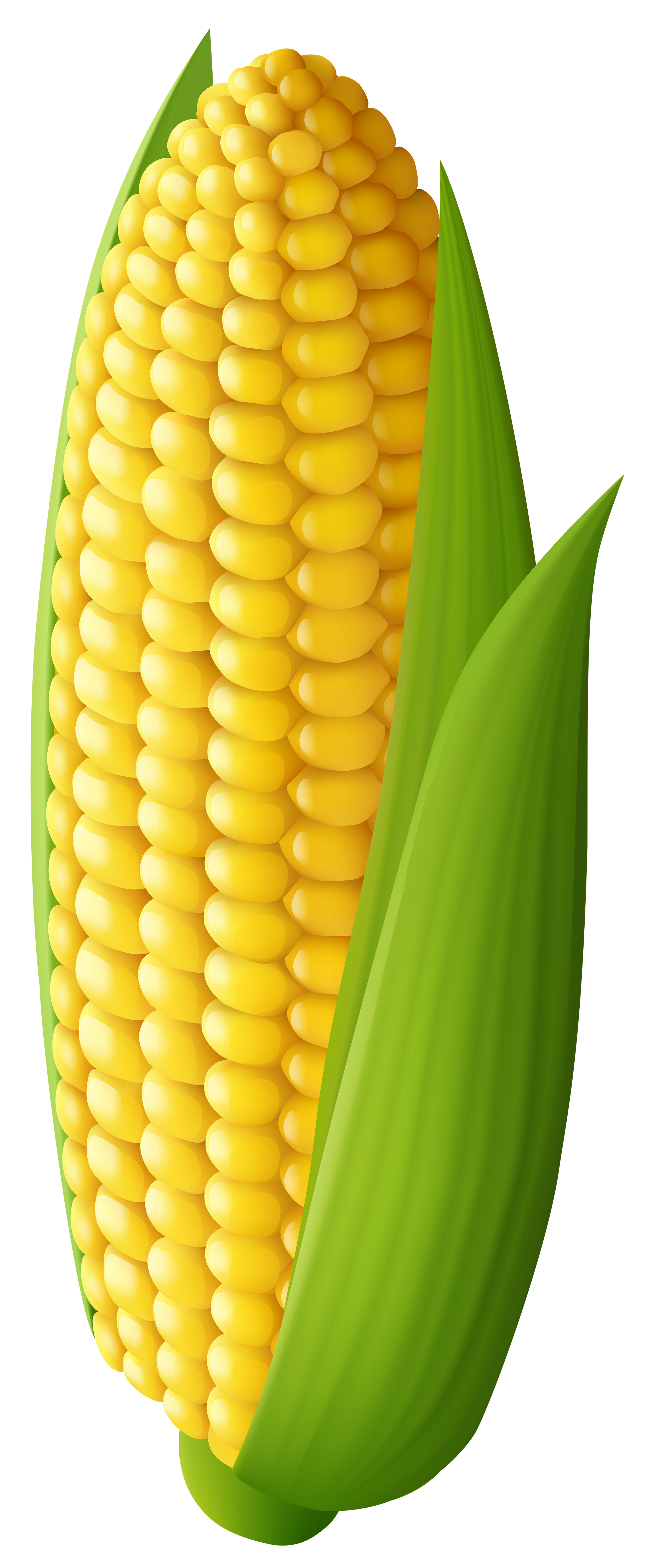 Corn Transparent Png Clip Art Image Gallery Yopriceville High Quality Images And Transparent Png Free Clipart Clip Art Art Images Fruit Art