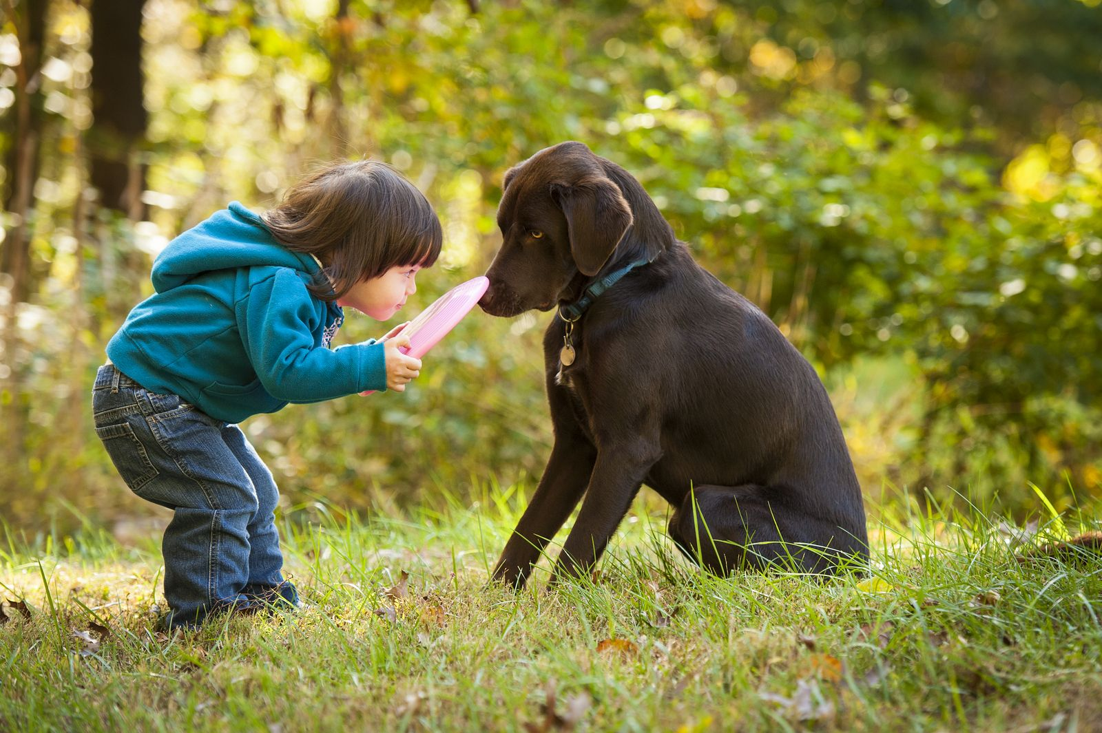 Tips on How to Foster Good Relationship Between Your Dog ...