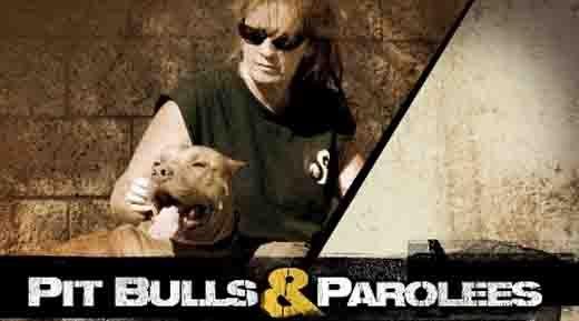 Pit Bulls And Parolees My Favorite Show Tia Rescuses Pit Bulls And Hires Parolees With Images Pitbulls Bull
