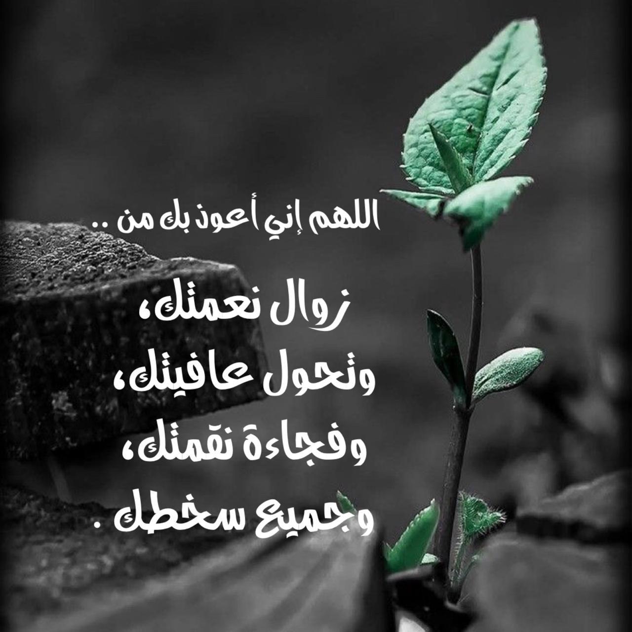 Pin By أدعية وأذكار On الدعاء Plant Leaves Islamic Prayer Plants