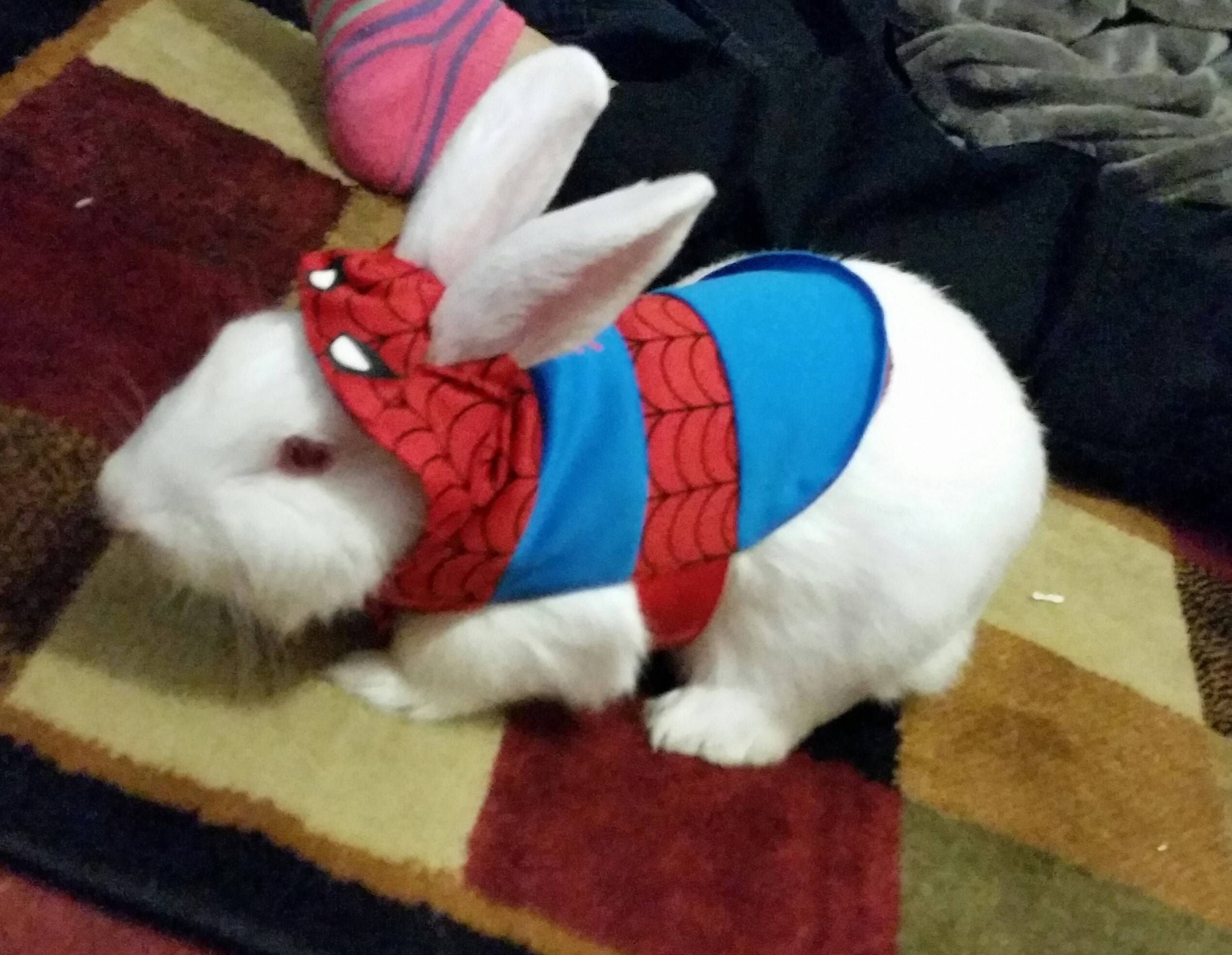 Pin by William on Rabbit Costume Ideas Bunny costume
