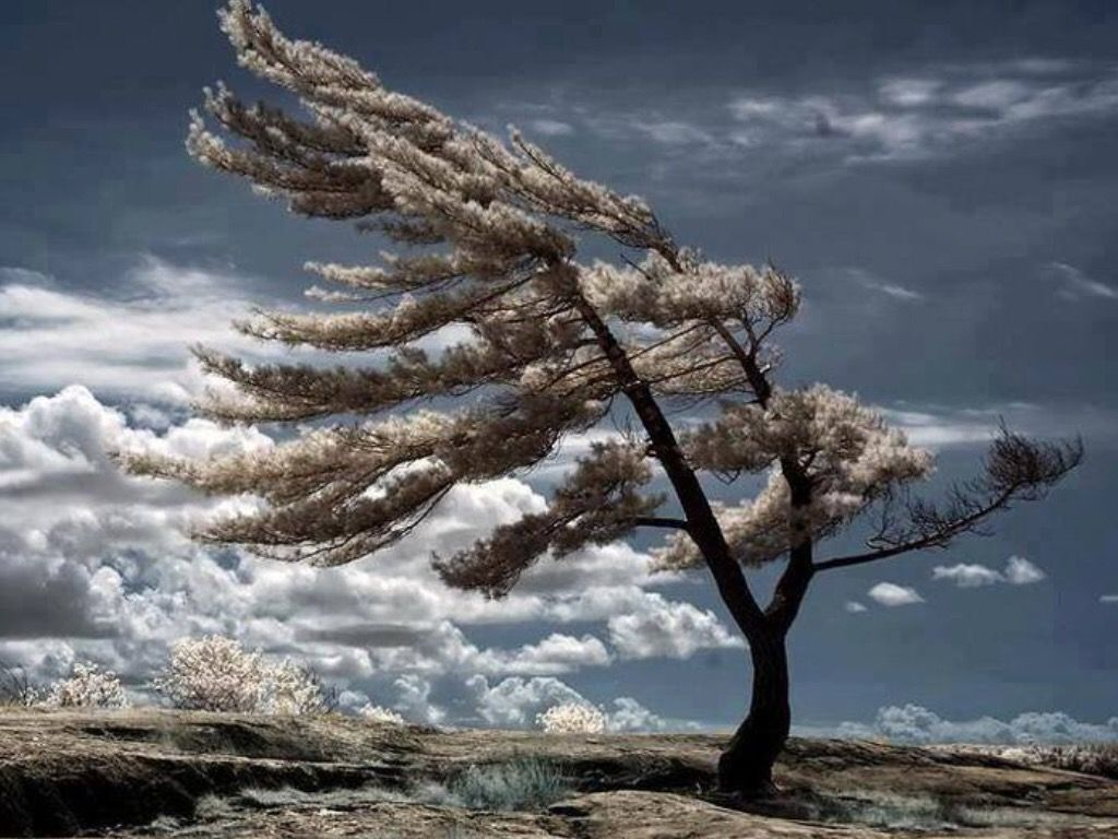 """""""It's the bare tree that stands strongest against the wind"""""""
