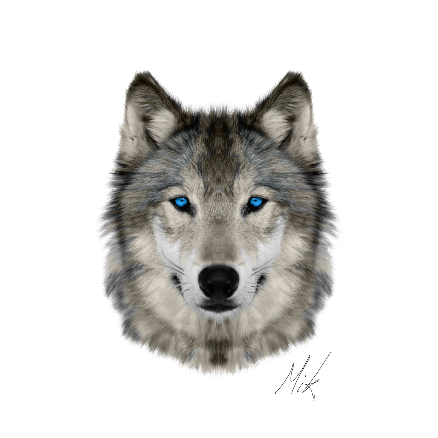 Wolf Head Png Google Search Wolf Face Wolf Photos Types Of Wolves