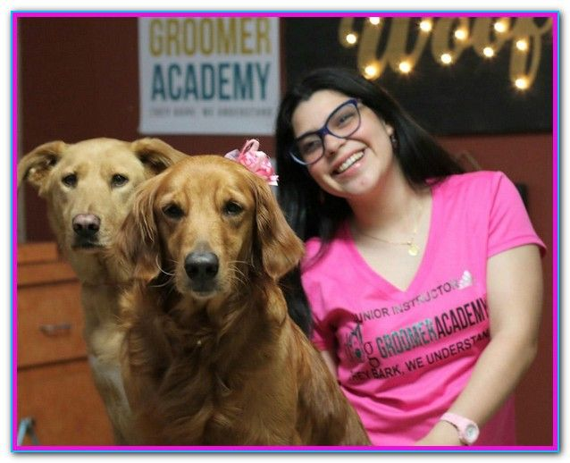 Dog Grooming Training School Near Me People Searching For