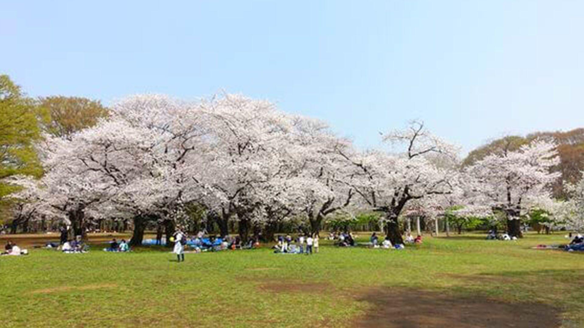 Spring Has Sprung How To Enjoy Spring In Tokyo 2020 Flip Guide Yoyogi Park Japan Travel Enjoyment