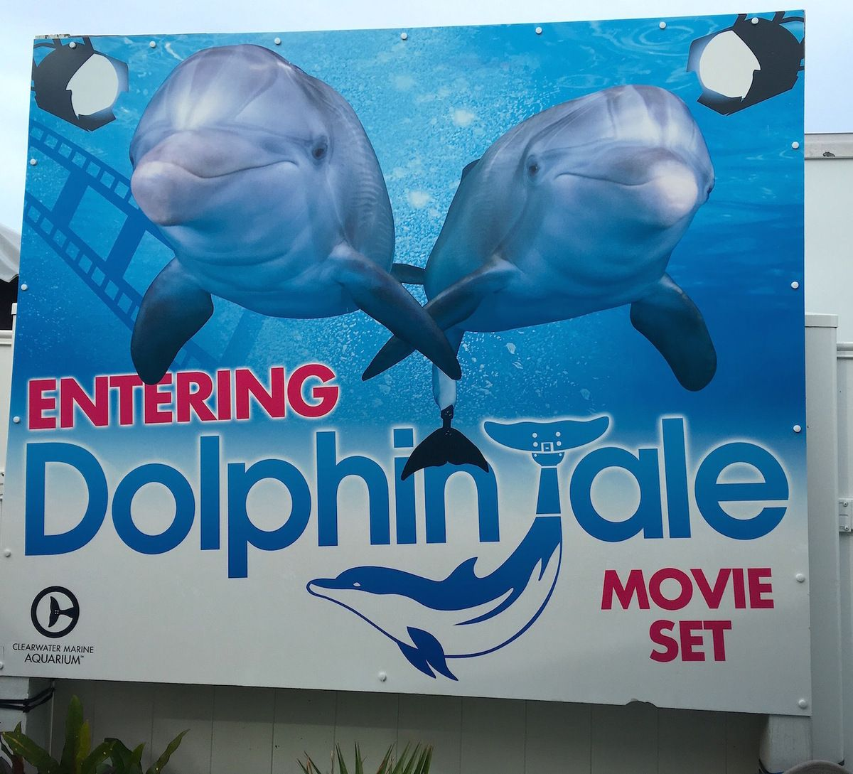Amazing story of Winter the dolphin is told at Clearwater