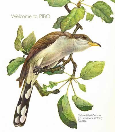 Pelee Island Bird Observatory