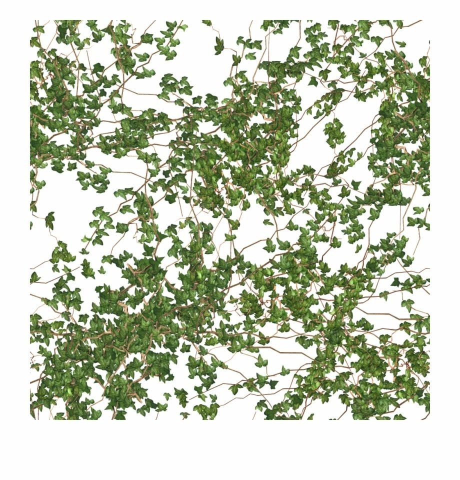 Download Hanging Vines Png Png Gif Base Modern Design Hanging Vines Ivy Plants Ivy Plant Indoor