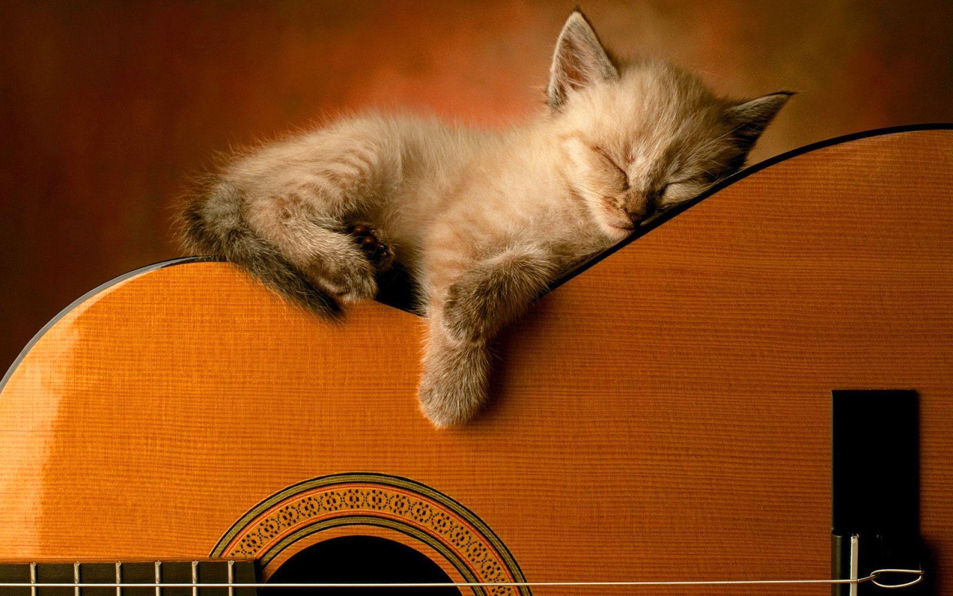 Kedi Gitar Muzik Calming Music Sleeping Animals Sleeping Kitten