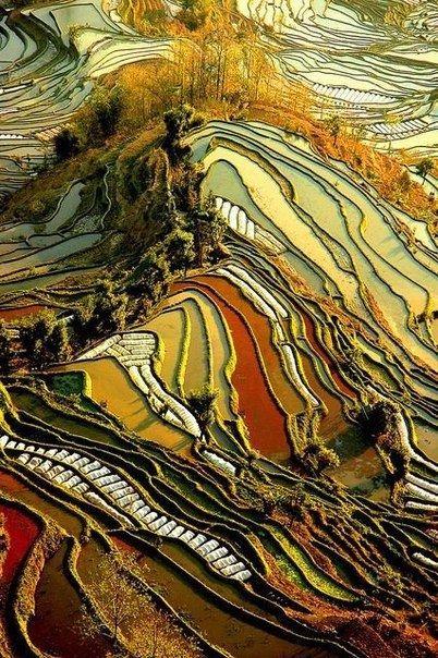 Нет, это не картины Ван Гога. Это Китай, провинция Юньнань ...
