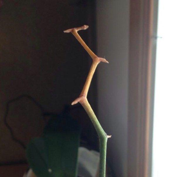 Cutting an Orchid Bloom Stem #growingorchids