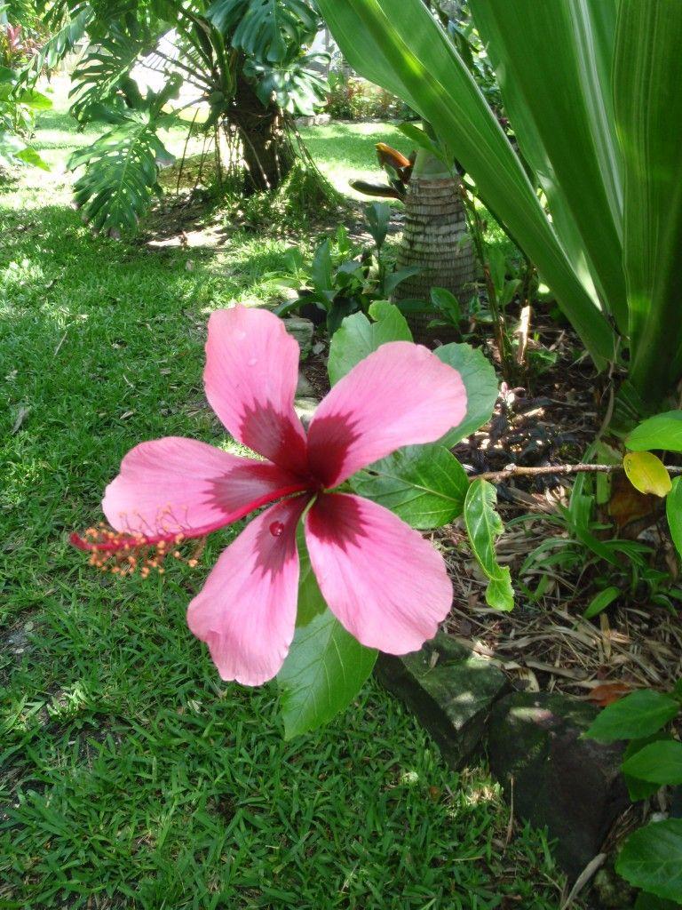 Free Plant Identification Tropical plants, Fiji islands