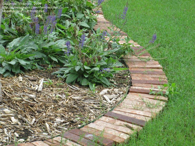 Brick Garden Edging for around blueberries A Watered Garden