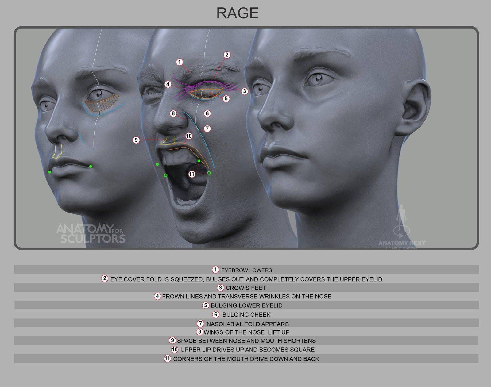 Amazing Upper Lip Anatomy Inspiration - Physiology Of Human Body ...