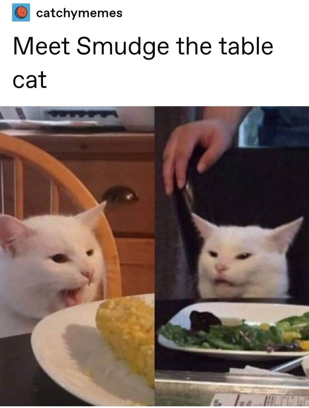 Behind The Meme Disgusted Table Cat Edition Funny Post Cats Memes Cat Memes