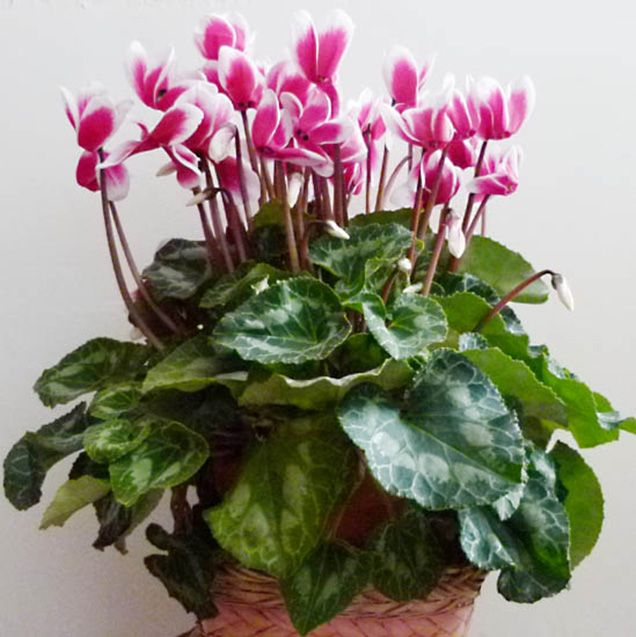 Plantas Con Muchas Flores
