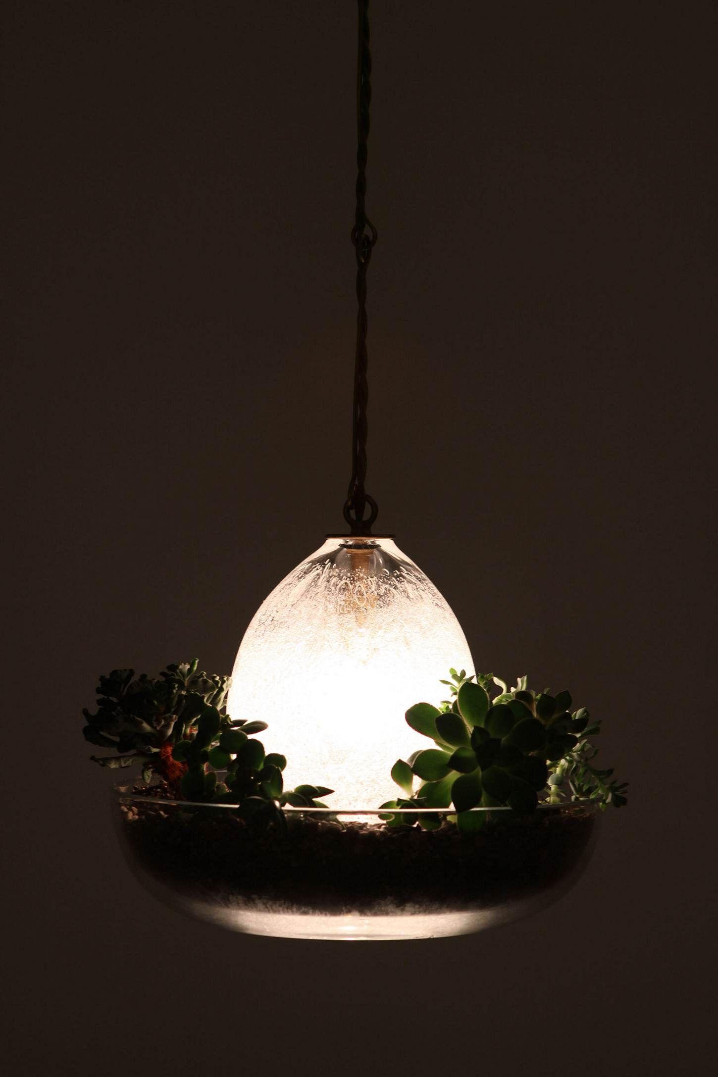 Terrarium pendant lamp mi casa su casa pinterest pendant lamp
