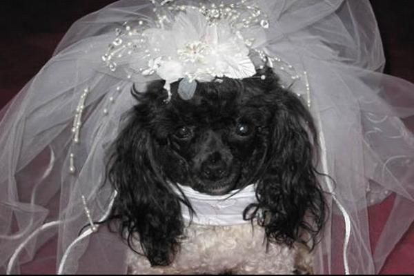Emma Rose Design Dog Bridal Gown Source: emmarosedesign.com